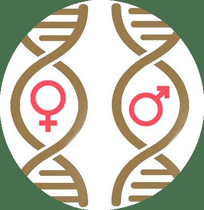 SEXAGE ADN